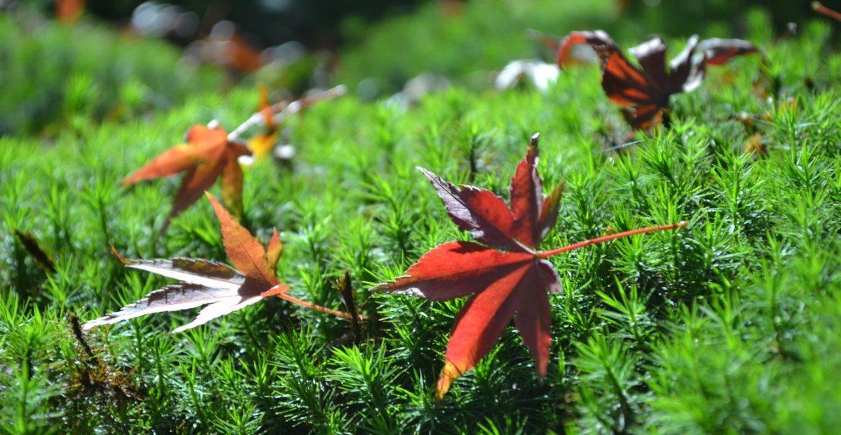 宝青庵の紅葉