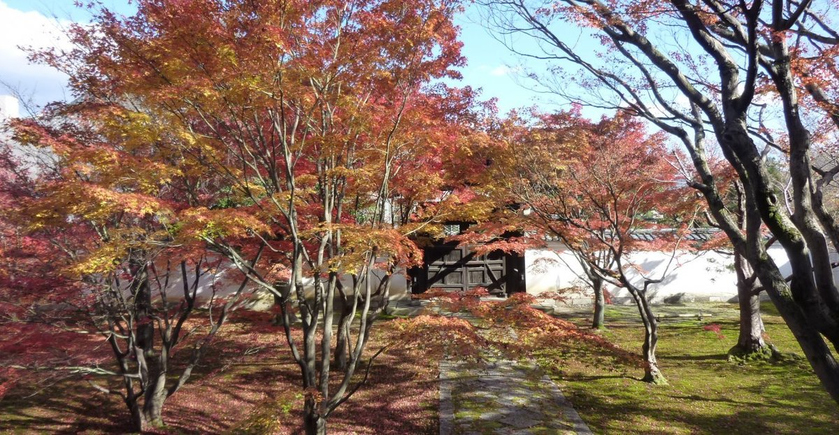 妙覚寺の紅葉