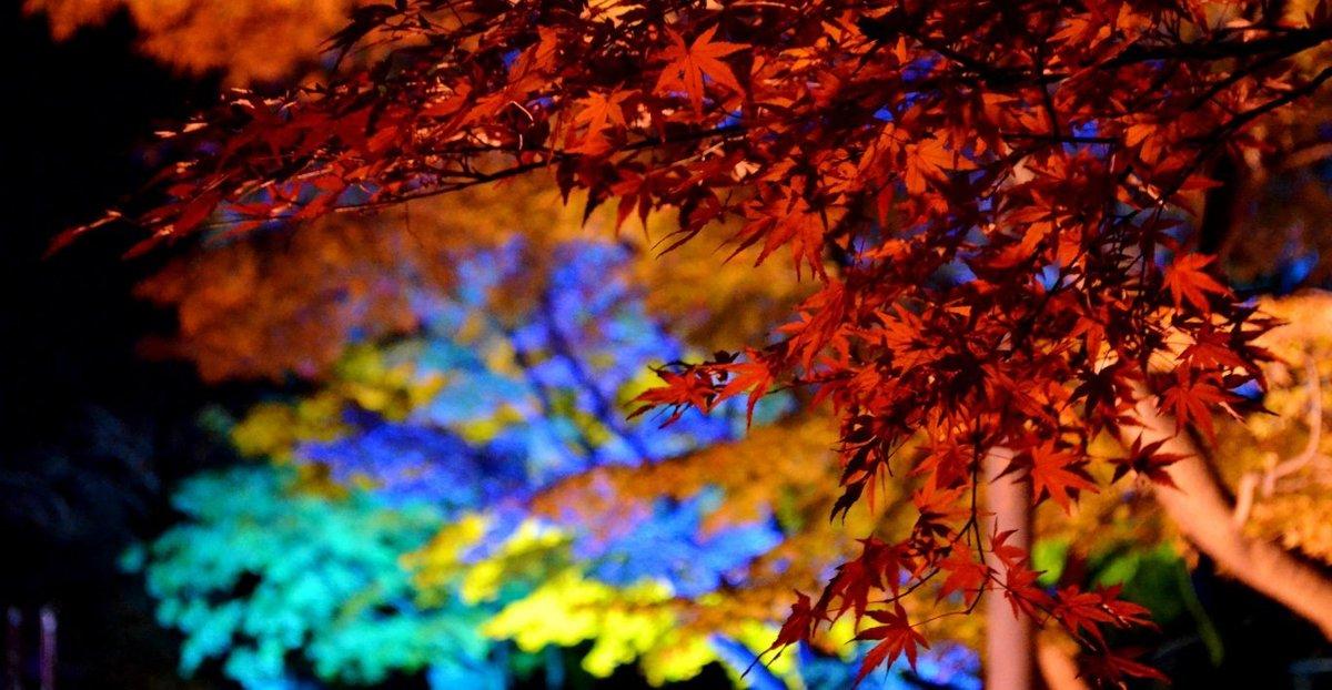 妙顕寺のライトアップ