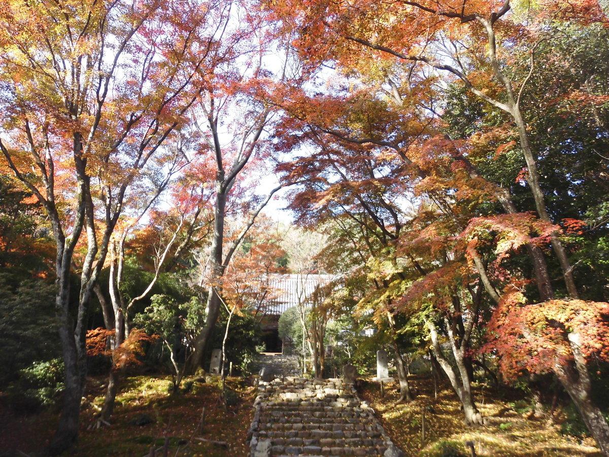 浄住寺の紅葉2016