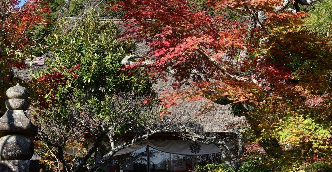 禅定寺の紅葉2018