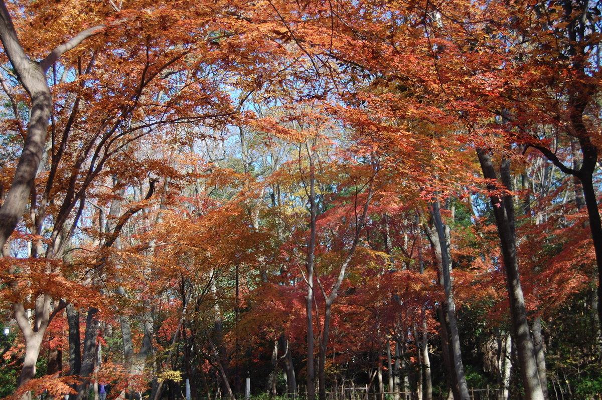 糺の森の紅葉2008