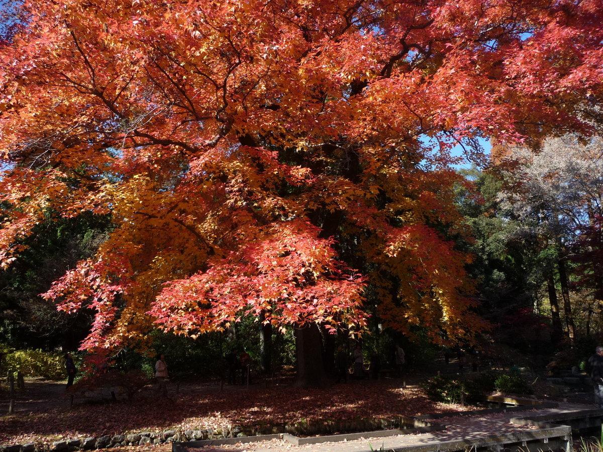 京都府立植物園の紅葉2009