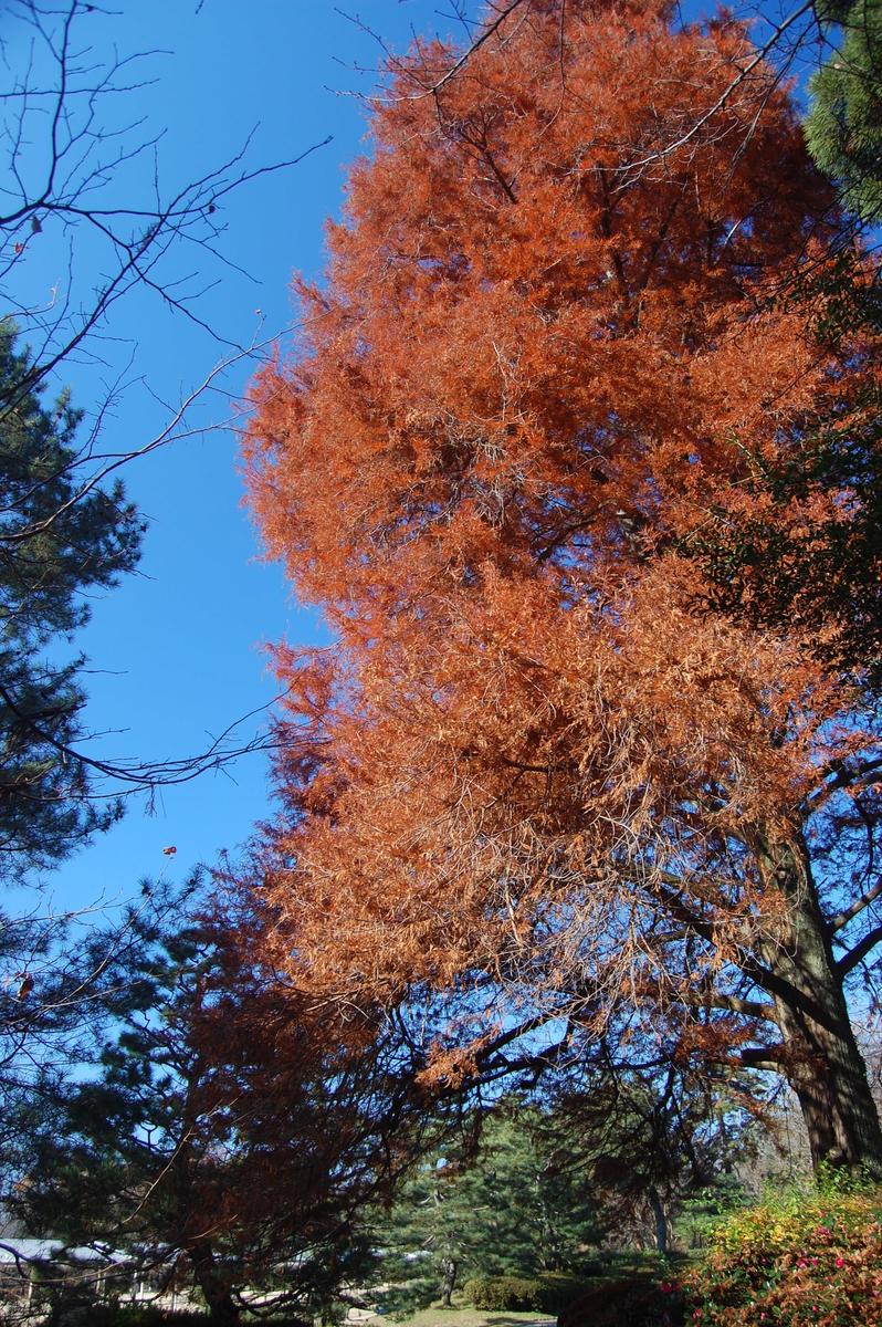 京都府立植物園の紅葉2008