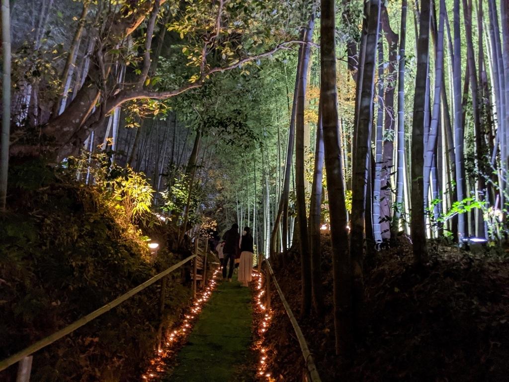 竹林の通路