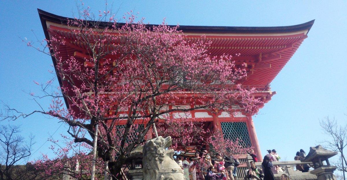 清水寺の梅