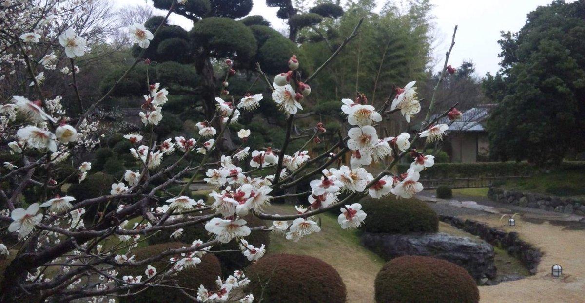 松花堂庭園の梅