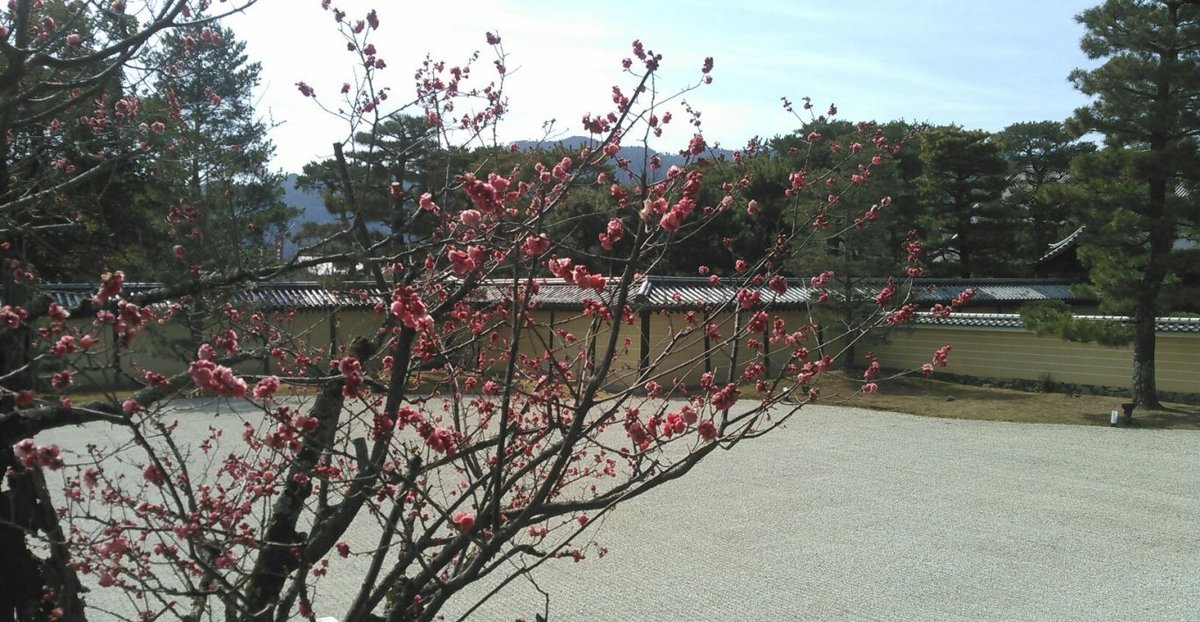 大沢池の梅