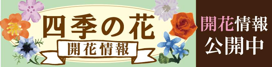 四季の花紅葉
