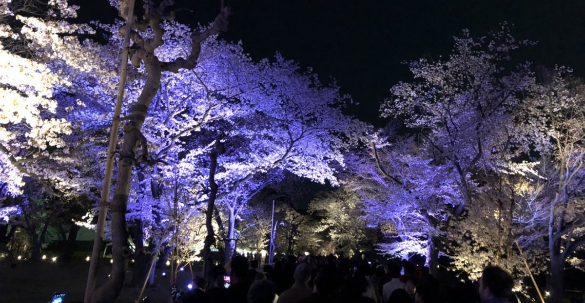 二条城の桜