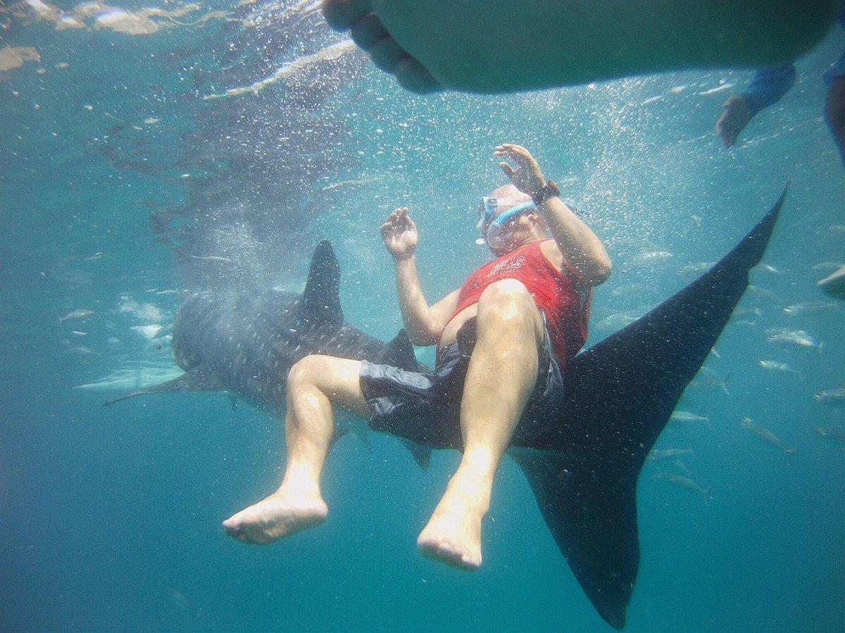 オスロブの海でジンベイザメと泳ぐ!