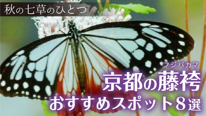 f:id:mk_taxi:20200427184218j:plain