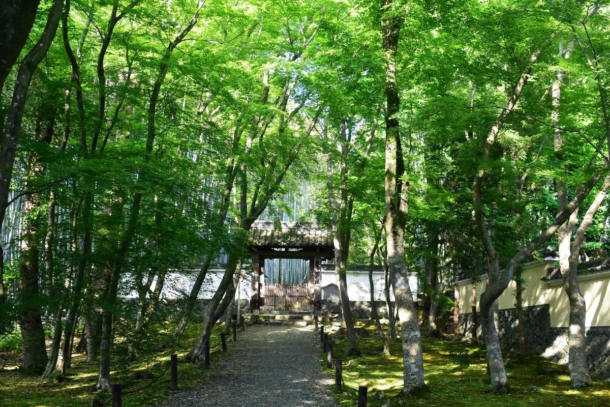 地蔵院(竹の寺)の新緑 2019年5月16日 撮影:MKタクシー