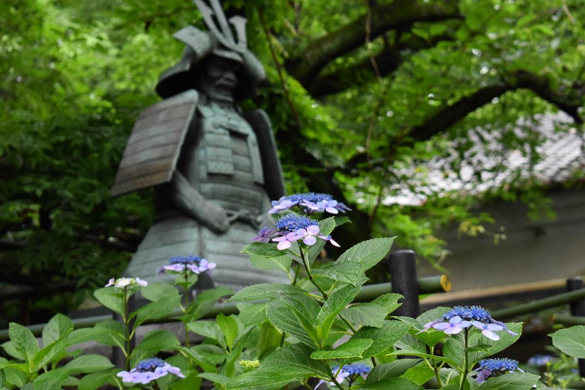 藤森神社 第二紫陽花苑 見頃 2018年6月21日 撮影:MKタクシー