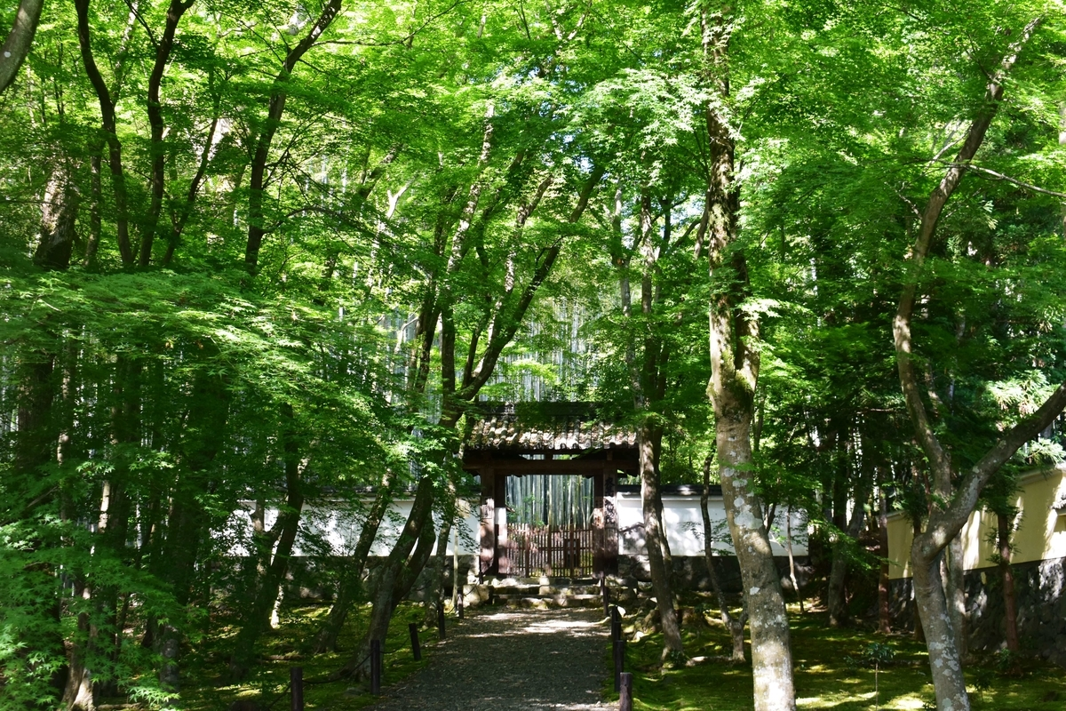 地蔵院(竹の寺)の新緑 2020年5月28日 撮影:MKタクシー