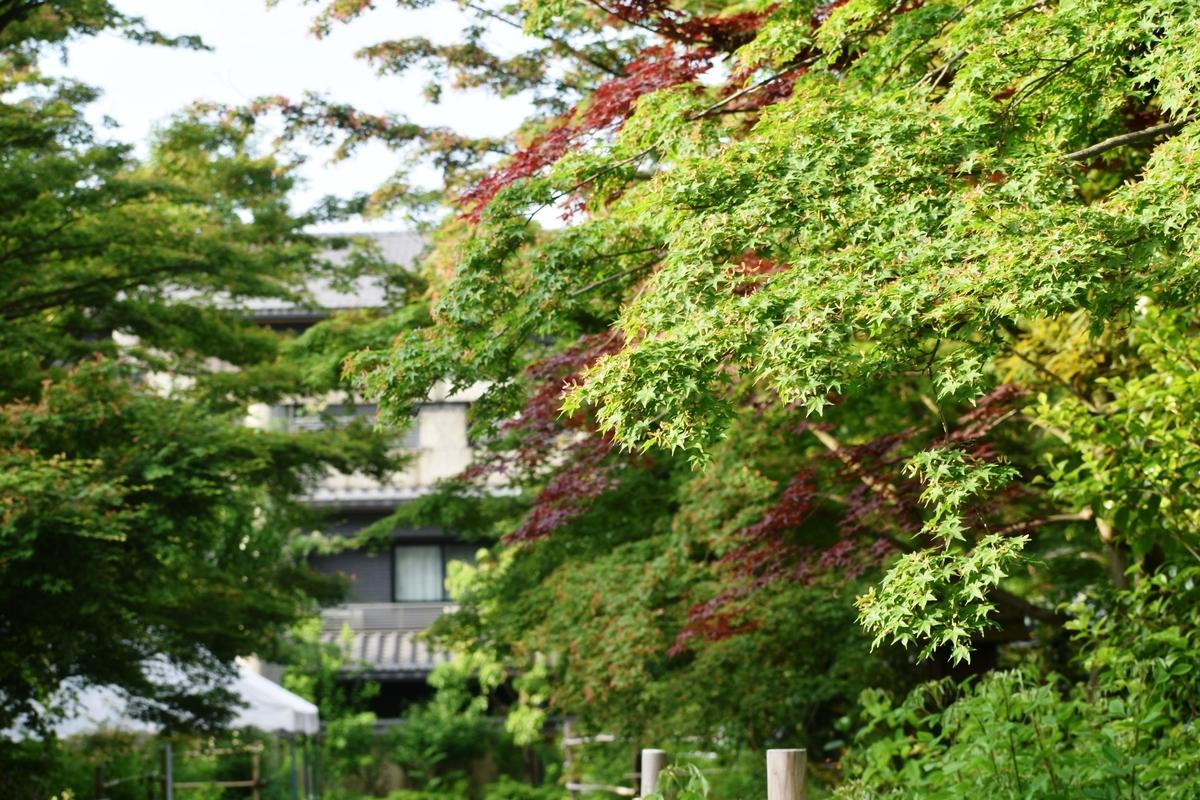 梨木神社の新緑 2019年5月17日 撮影:MKタクシー