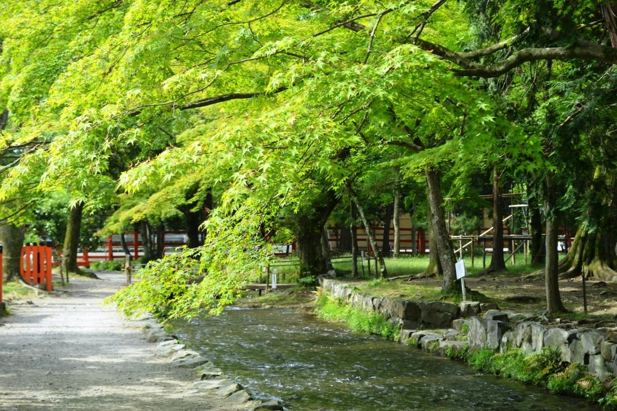 上賀茂神社の新緑 2019年5月12日 撮影:MKタクシー