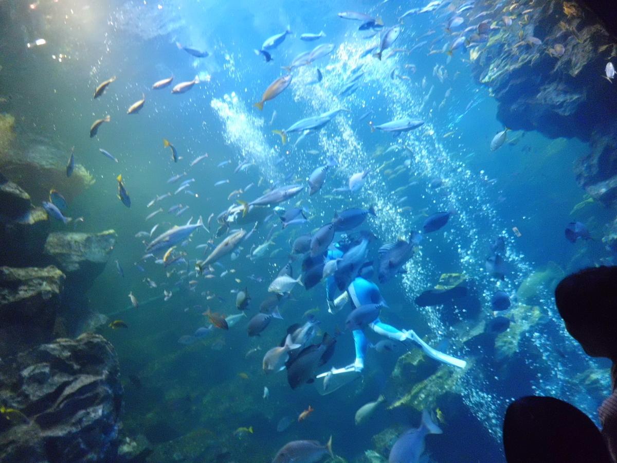 京都水族館 2012年5月12日 撮影:MKタクシー