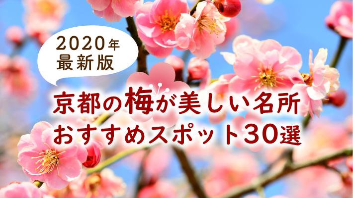 京都の梅が美しい名所おすすめスポット30選