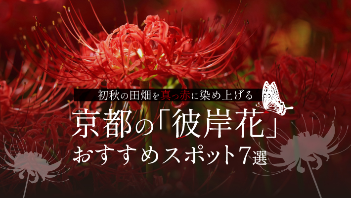 初秋の田畑を真っ赤に染め上げる京都の彼岸花おすすめスポット7選