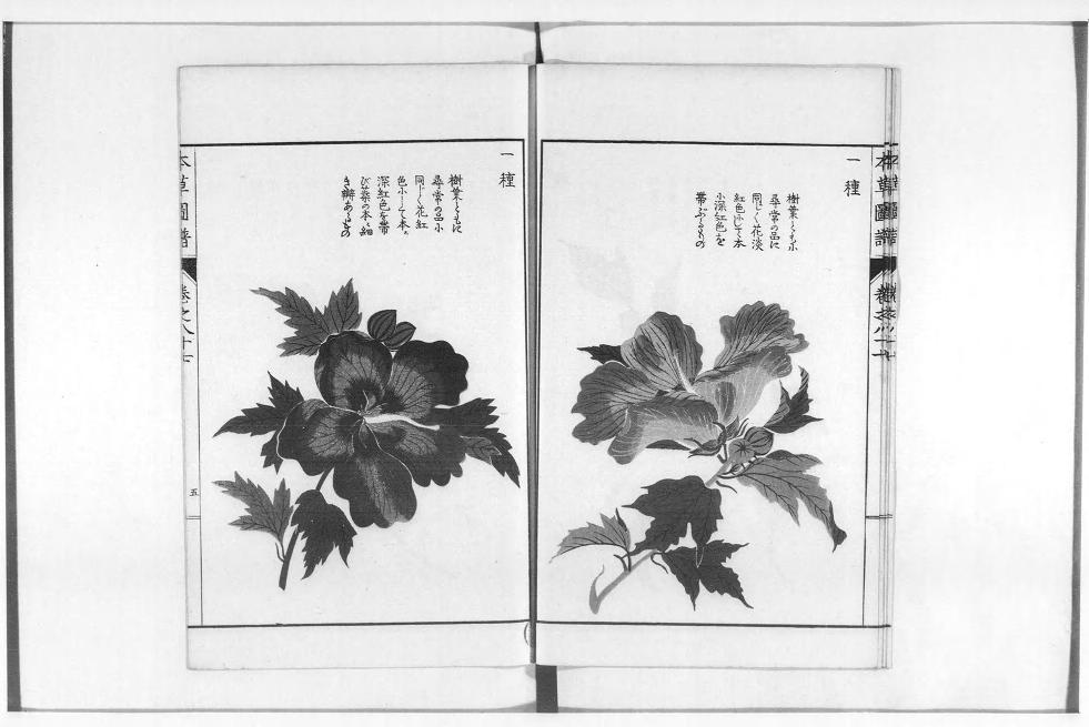 「本草図譜」国立国会デジタルコレクションより