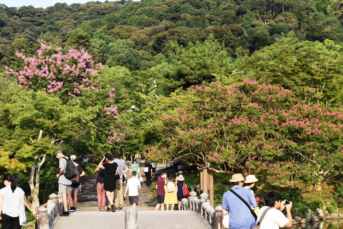 円山公園 サルスベリ 見頃 2019年8月10日 撮影:MKタクシー