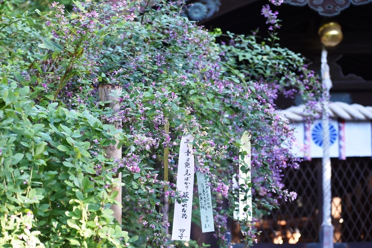 梨木神社 萩 五分咲き 2018年9月28日 撮影:MKタクシー