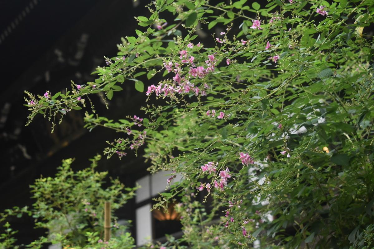 真如堂 萩 咲き始め 2018年9月23日 撮影:MKタクシー
