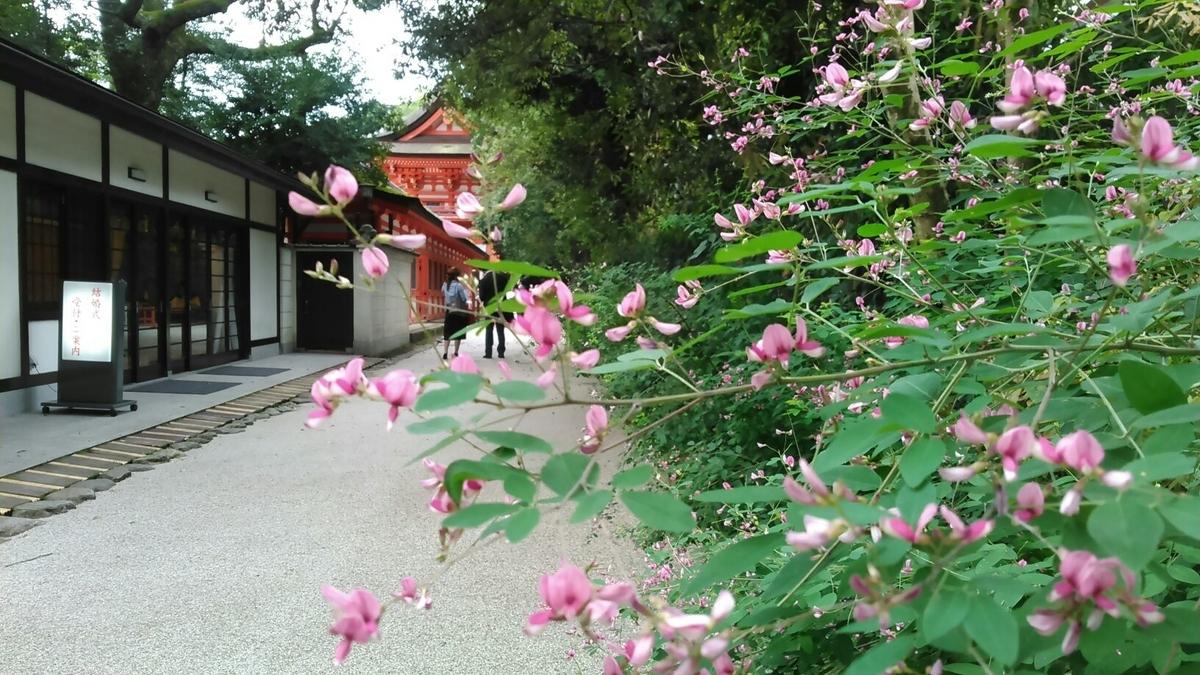 下鴨神社 萩 咲き始め 2015年9月10日 撮影:MKタクシー