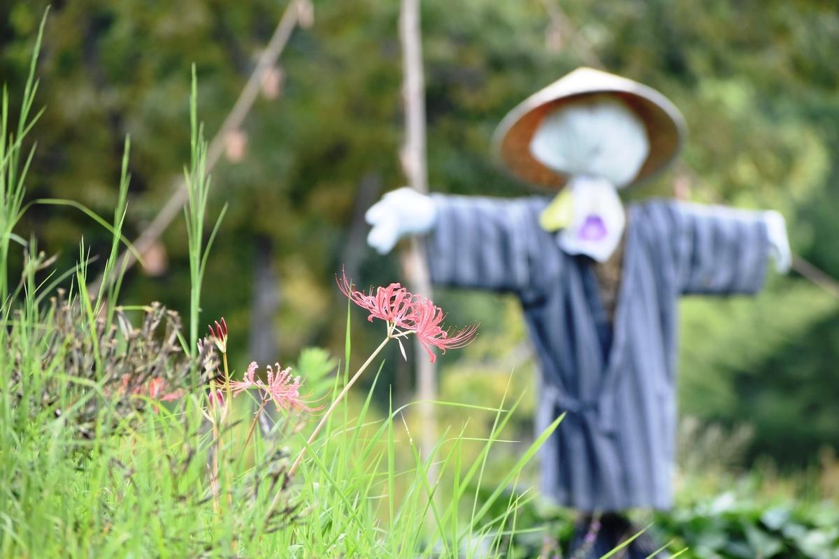 けいはんな記念公園 彼岸花 咲きはじめ 2020年9月12日 撮影:MKタクシー