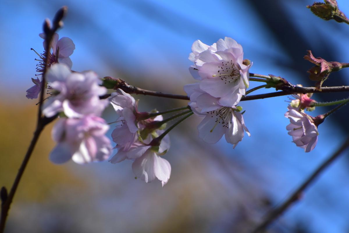 アーコレード 京都府立植物園 2019年11月13日 撮影:MKタクシー
