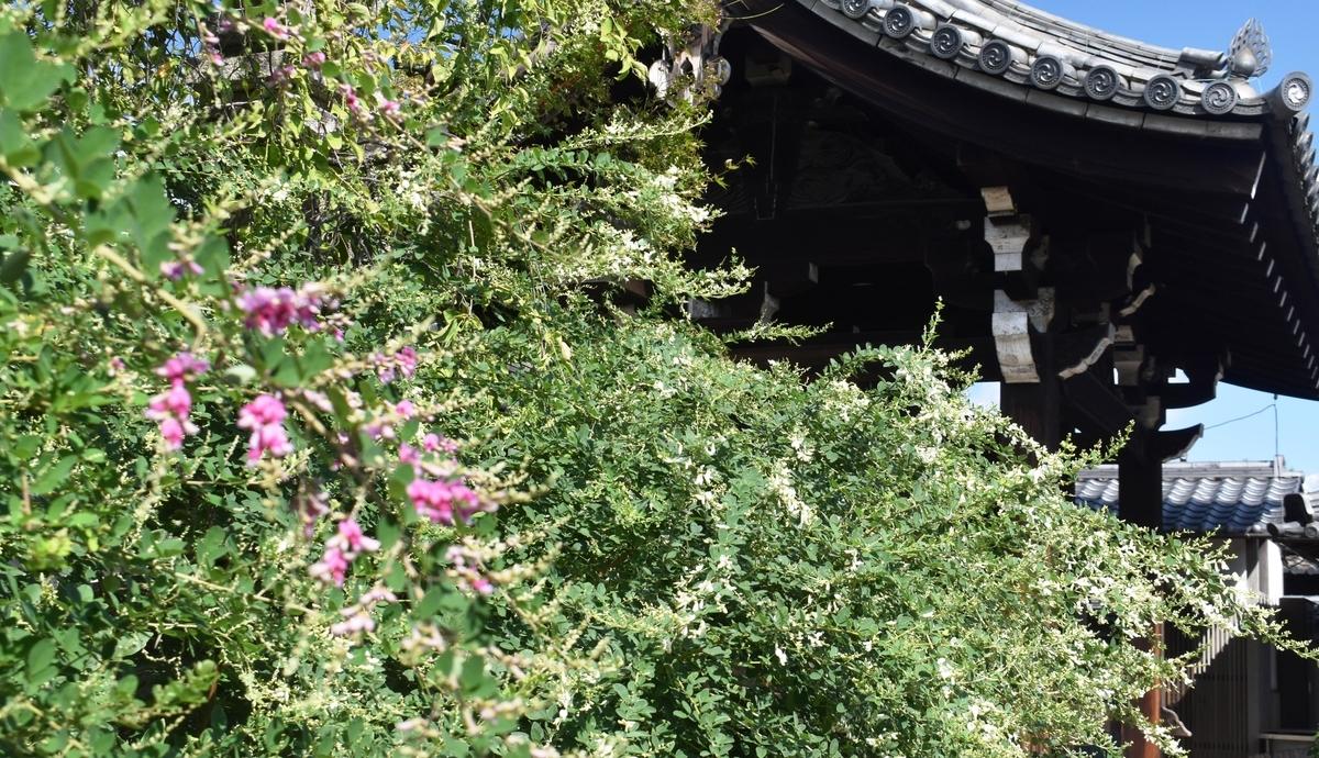 法住寺 萩 咲き始め 2020年9月19日 撮影:MKタクシー