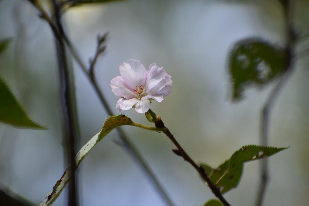 アーコレード 京都府立植物園 2020年9月19日 撮影:MKタクシー