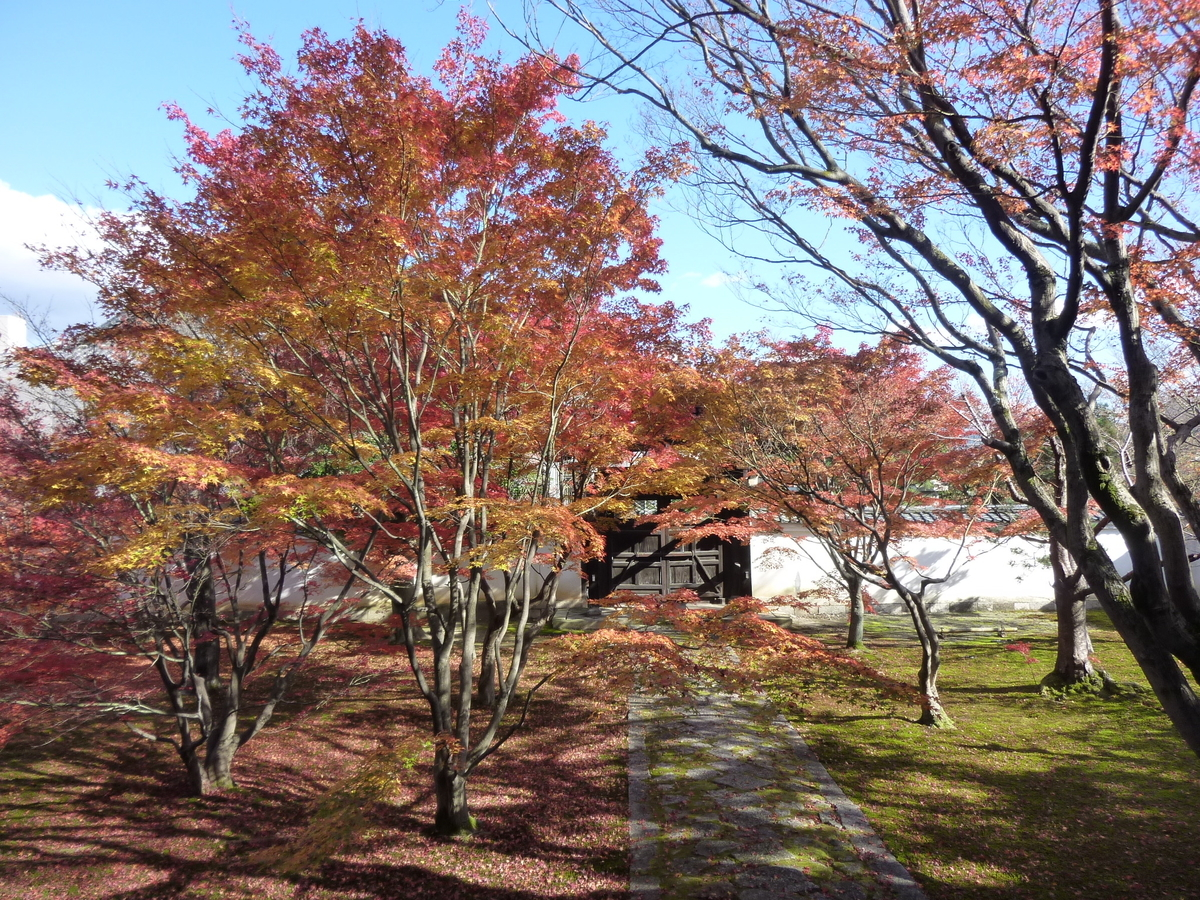 妙覚寺・法姿園 見頃 2010年11月27日 撮影:MKタクシー