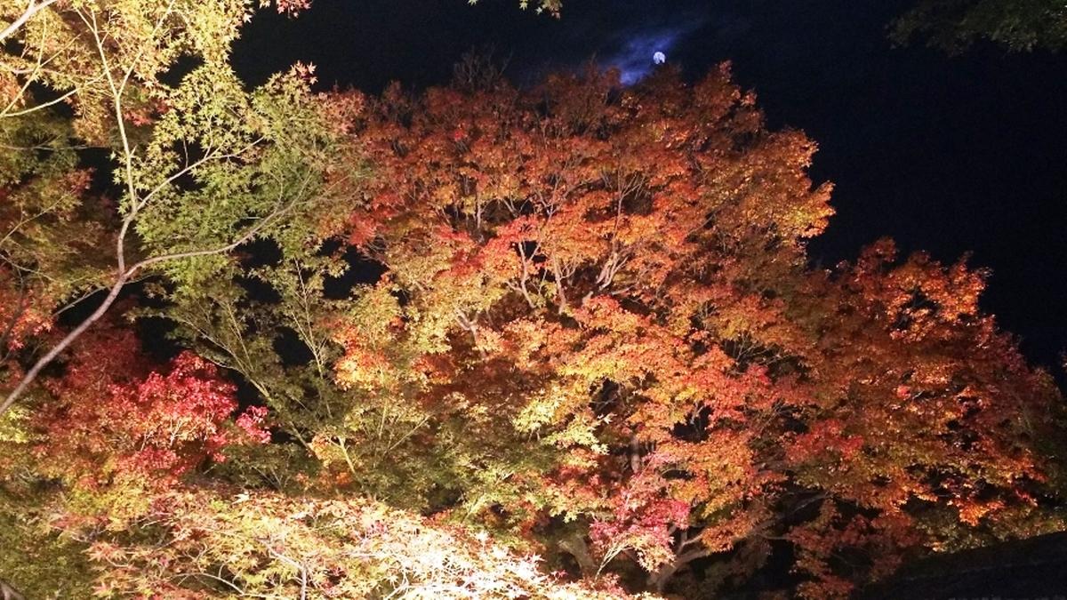 妙覚寺・法姿園の紅葉ライトアップ 見頃 2018年11月21日 撮影:MKタクシー
