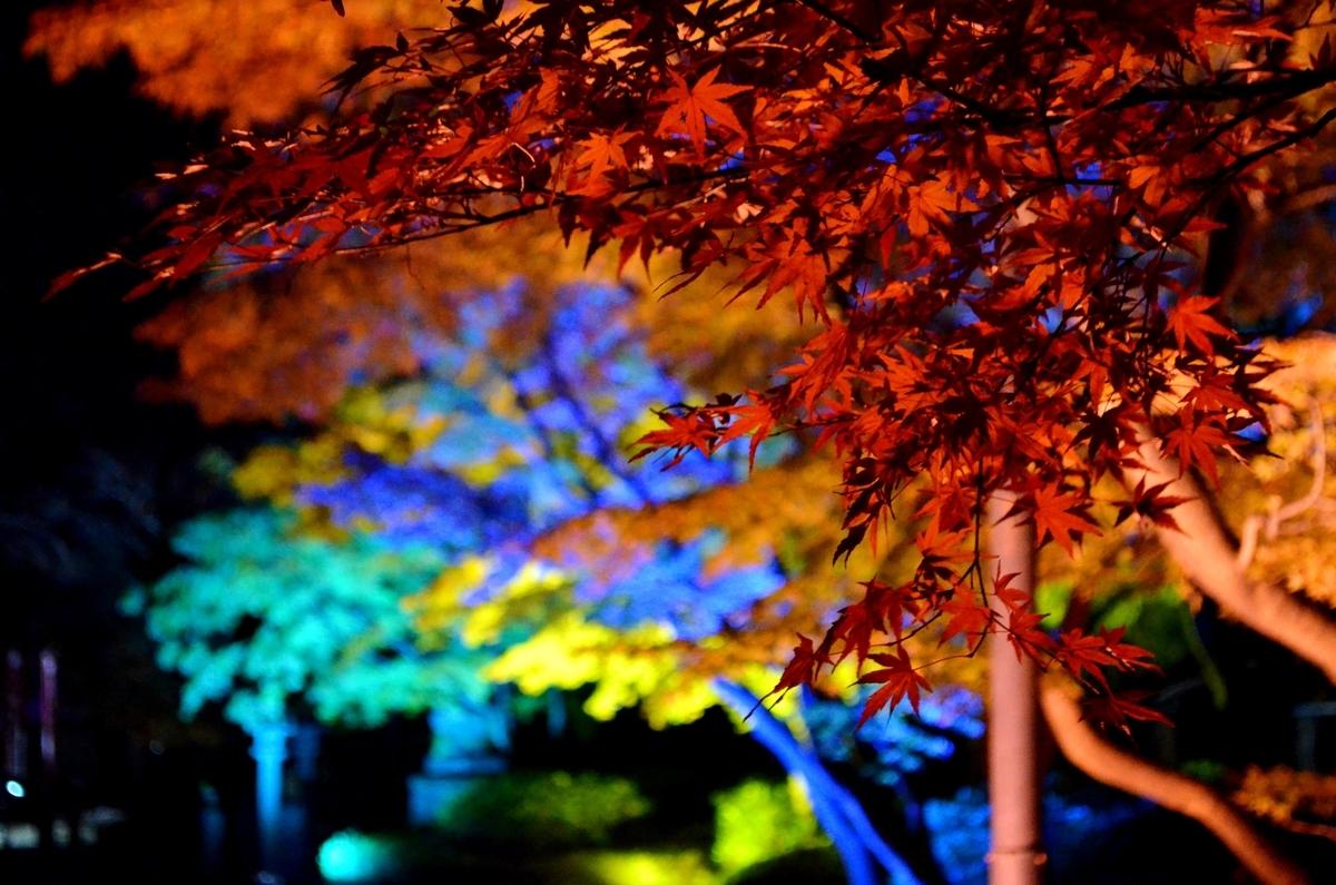 妙顕寺・本堂横の紅葉ライトアップ 見頃 2017年11月25日 撮影:MKタクシー