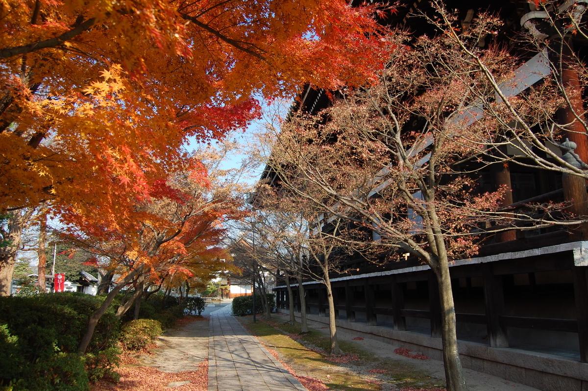 妙顕寺・本堂横の紅葉 散りはじめ 2007年12月8日 撮影:MKタクシー