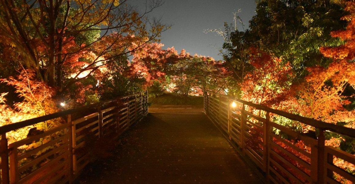 梅小路公園・朱雀の庭の紅葉ライトアップ 見頃 2017年11月19日 撮影:MKタクシー