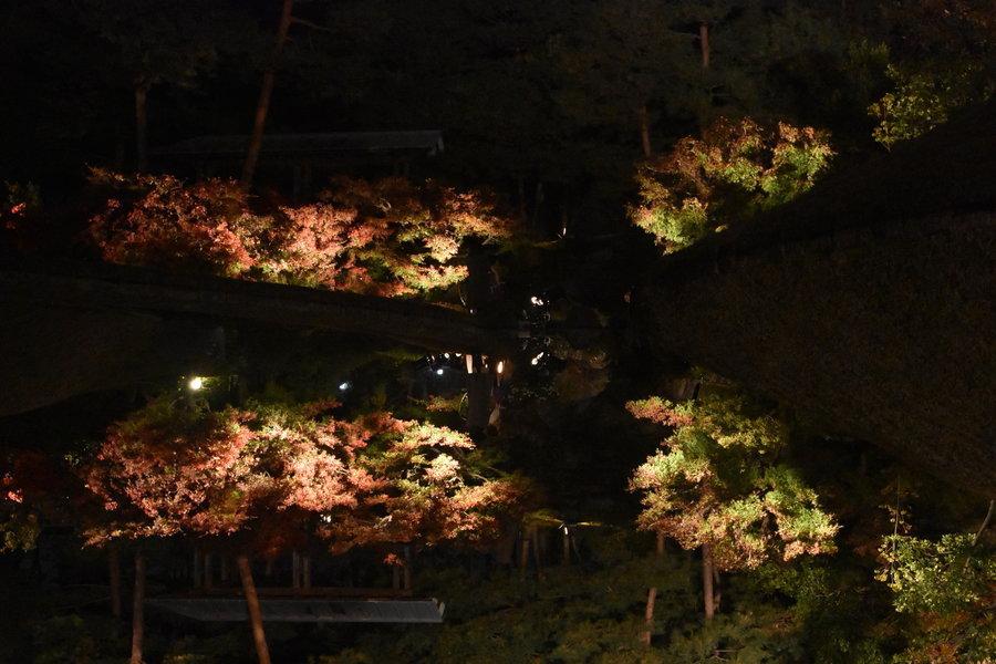 梅小路公園・朱雀の庭の紅葉ライトアップ 実は上下さかさま 見頃 2017年11月19日 撮影:MKタクシー