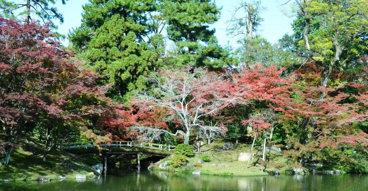 仙洞御所・南池の紅葉 見頃近し 2017年11月11日 撮影:MKタクシー