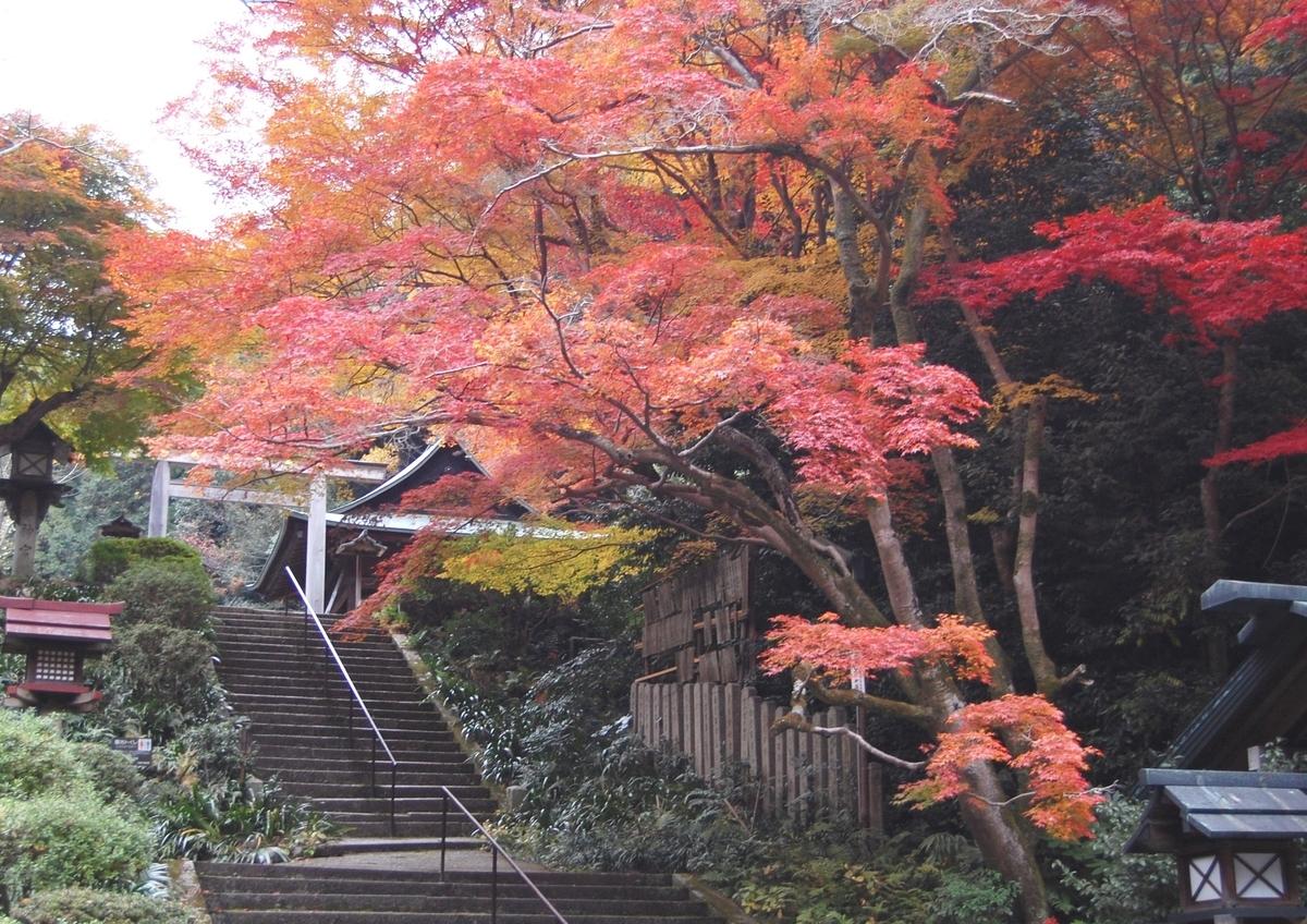 日向大神宮の紅葉 見頃 2007年11月29日 撮影:MKタクシー