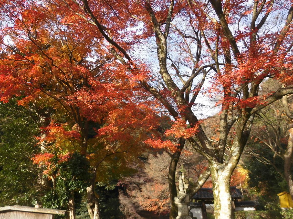 清閑寺の紅葉 見頃 2016年11月21日 撮影:MKタクシー