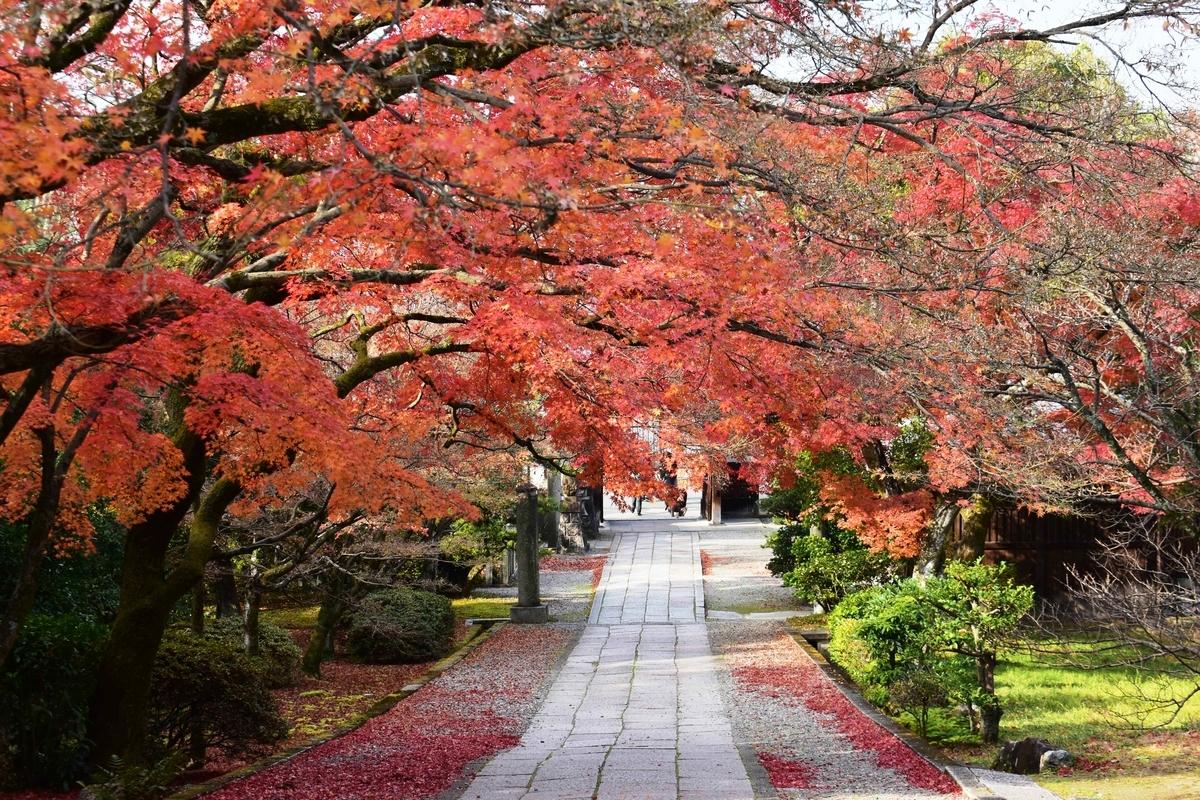 養源院参道の紅葉 散りはじめ 2019年12月14日 撮影:MKタクシー