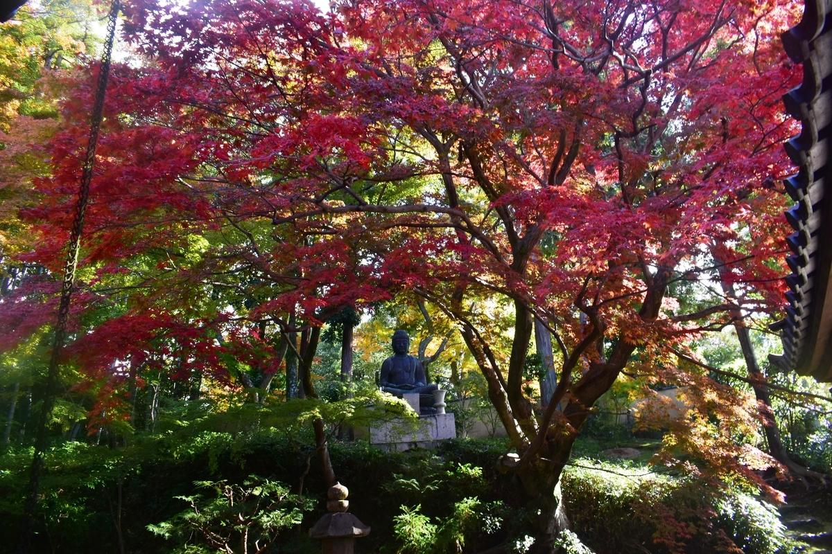 栄摂院南庭の紅葉 見頃 2019年11月20日 撮影:MKタクシー