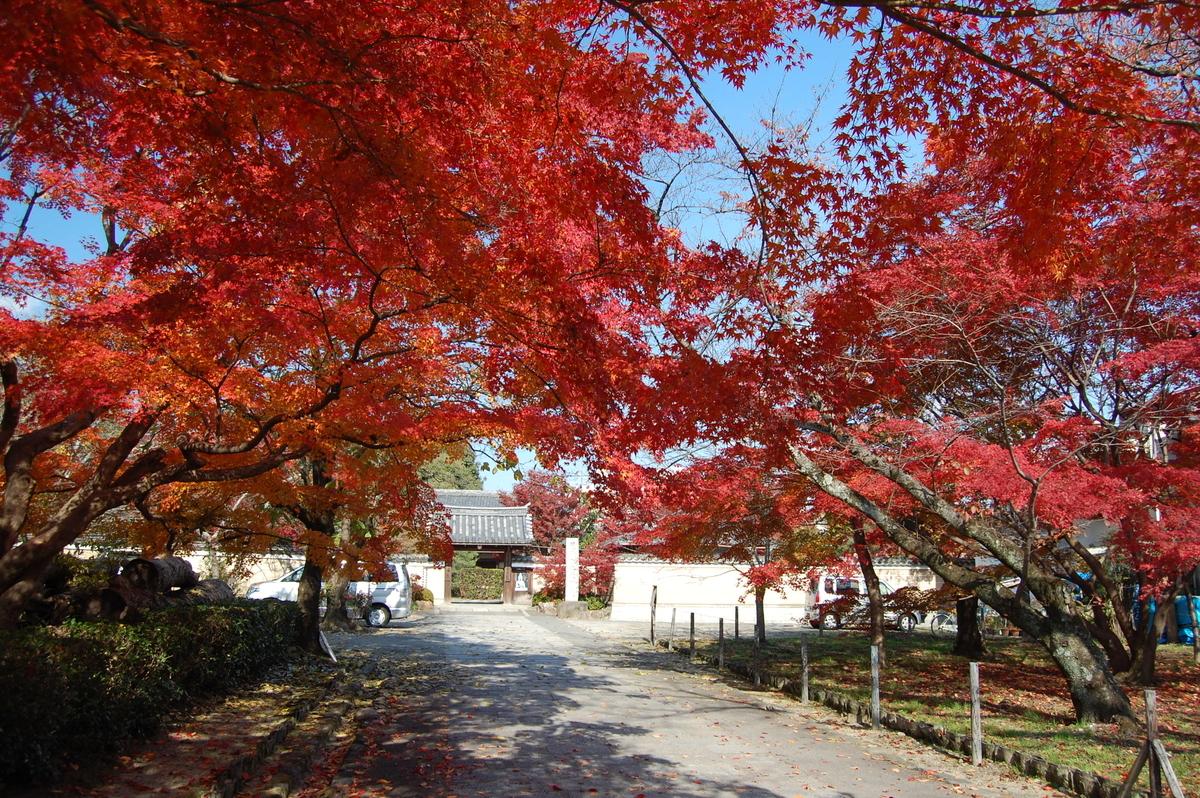 神光院の紅葉 見頃 2007年12月1日 撮影:MKタクシー