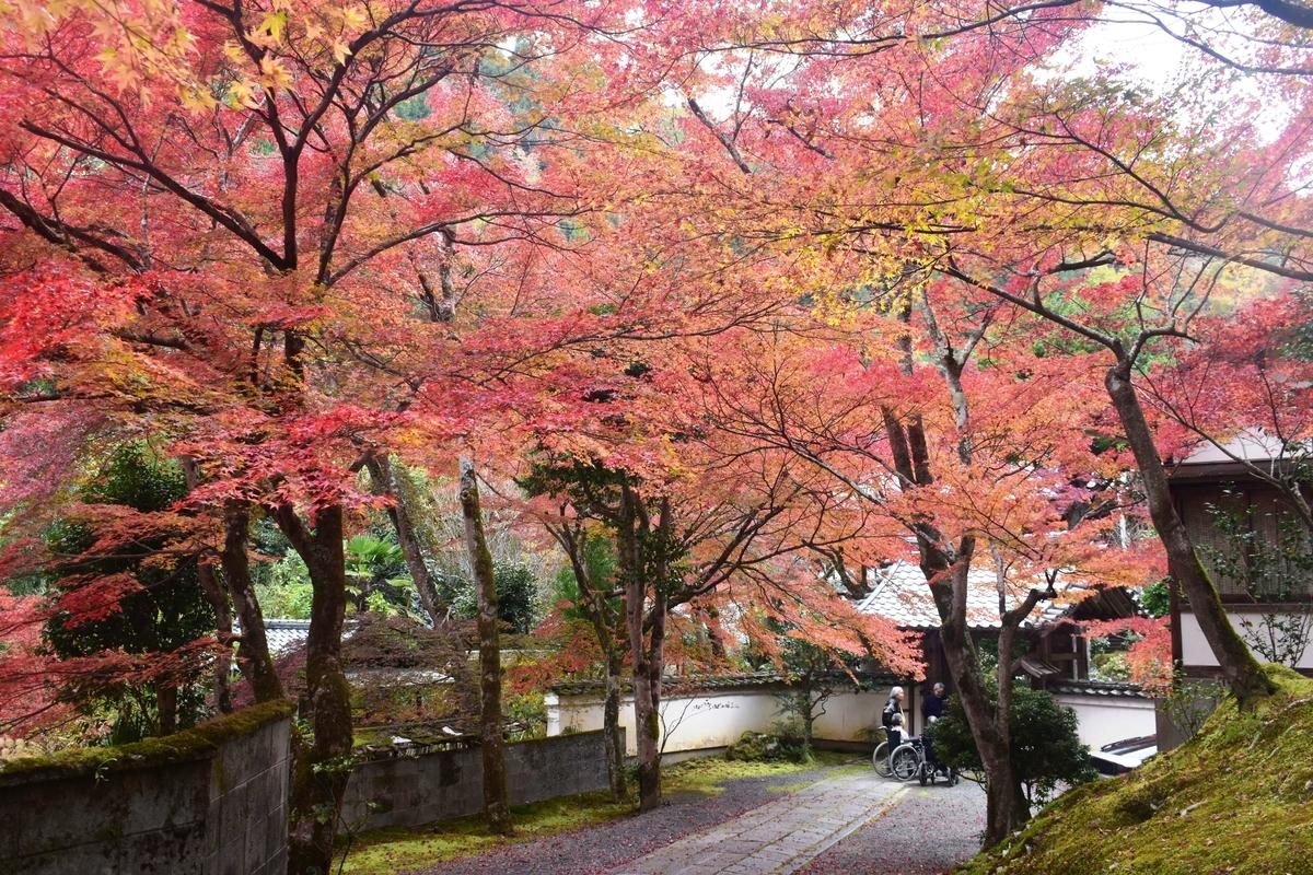 吟松寺の紅葉 見頃 2019年11月24日 撮影:MKタクシー
