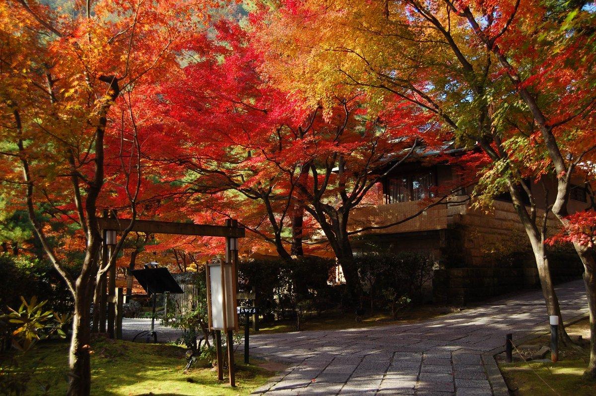 しょうざん日本庭園の紅葉 見頃 2007年12月1日 撮影:MKタクシー