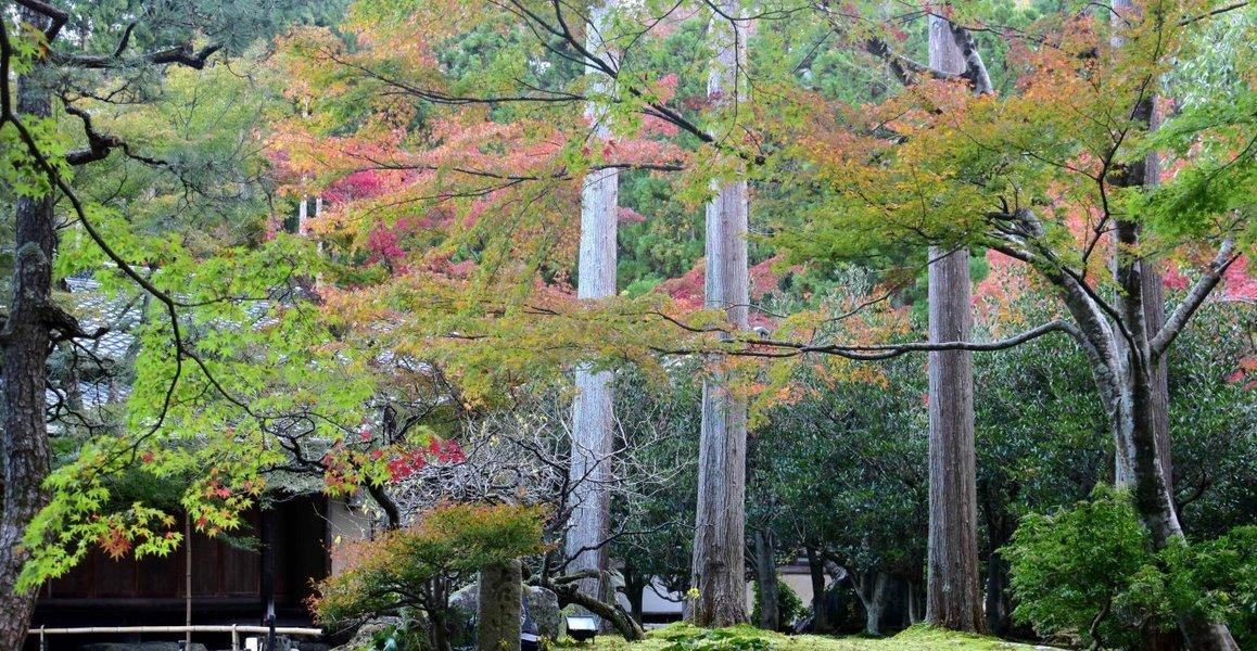しょうざん日本庭園の紅葉 色づきはじめ 2018年11月14日 撮影:MKタクシー