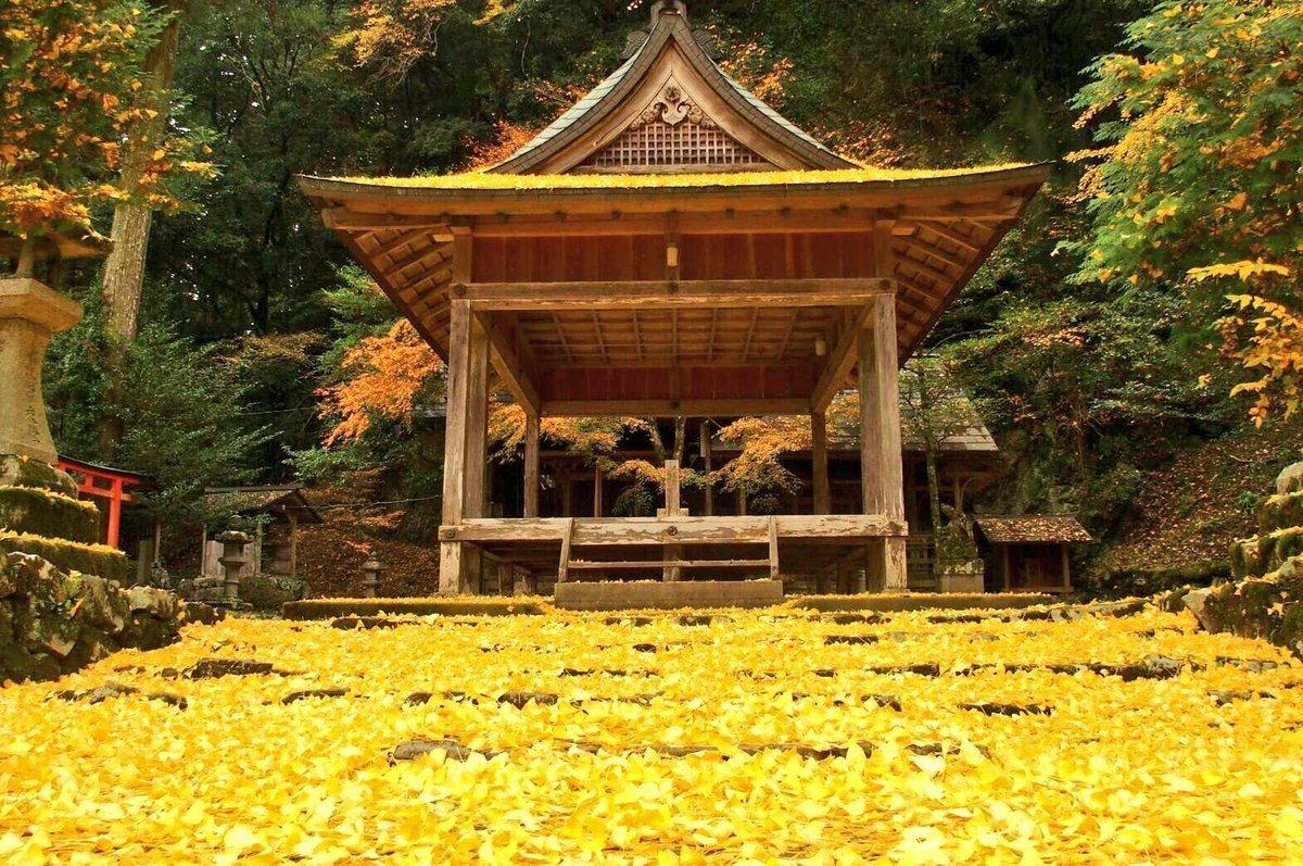 岩戸落葉神社の黄葉 見頃 2016年11月21日 撮影:MKタクシー