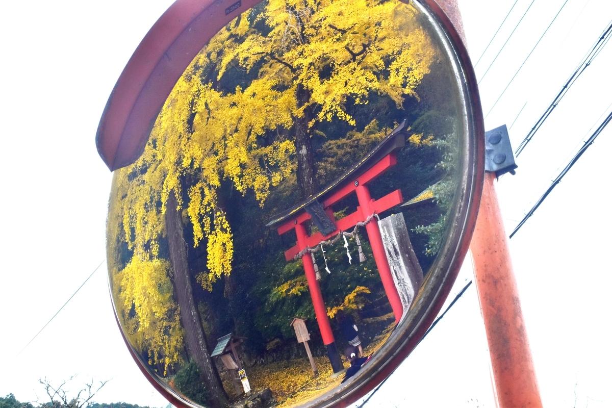 岩戸落葉神社の黄葉 見頃 2019年11月24日 撮影:MKタクシー
